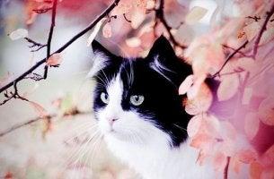ilusytación de un gato