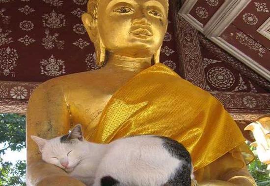gato con buda