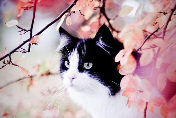 La historia del gato manchado y la golondrina Sinhá