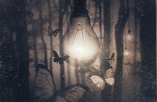 mariposas alrededor de perilla de luz