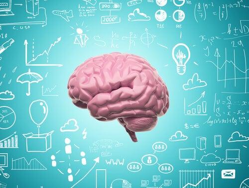 Gracias a nuestra Neuroplasticidad nunca dejamos de aprender