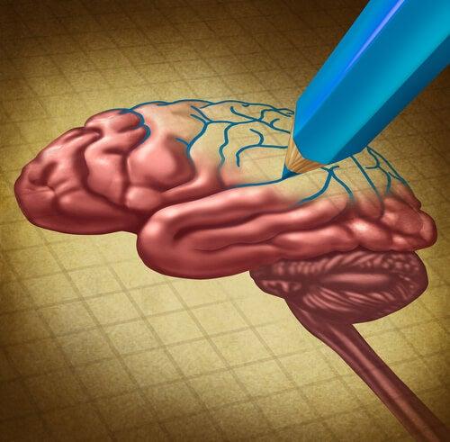 Lápiz dibujando un cerebro