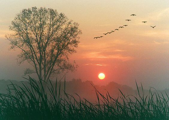 amanecer simbolizando que todo fluya