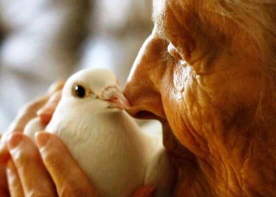 anciana con paloma simbolizando a los cuidadores