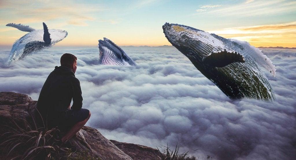 hombre mirando cielo con ballenas