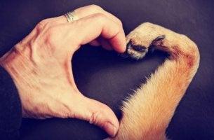 Mano de humano con la de un perro haciendo un corazón