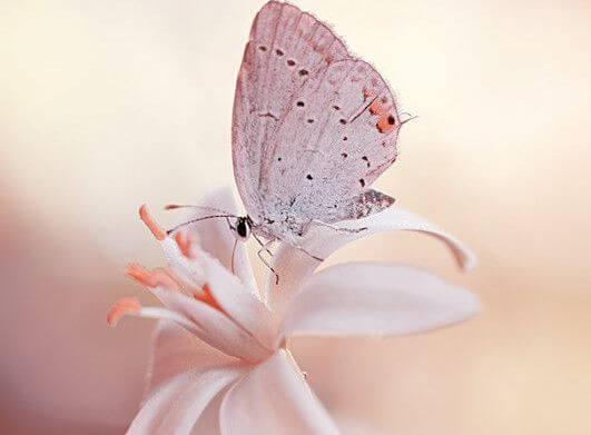 mariposa en una flor consiguiendo que todo fluya