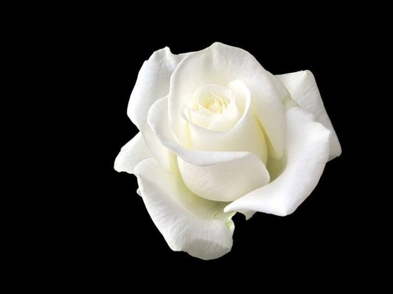 Sophie Scholl, la joven que le plantó cara a Hitler con una rosa blanca