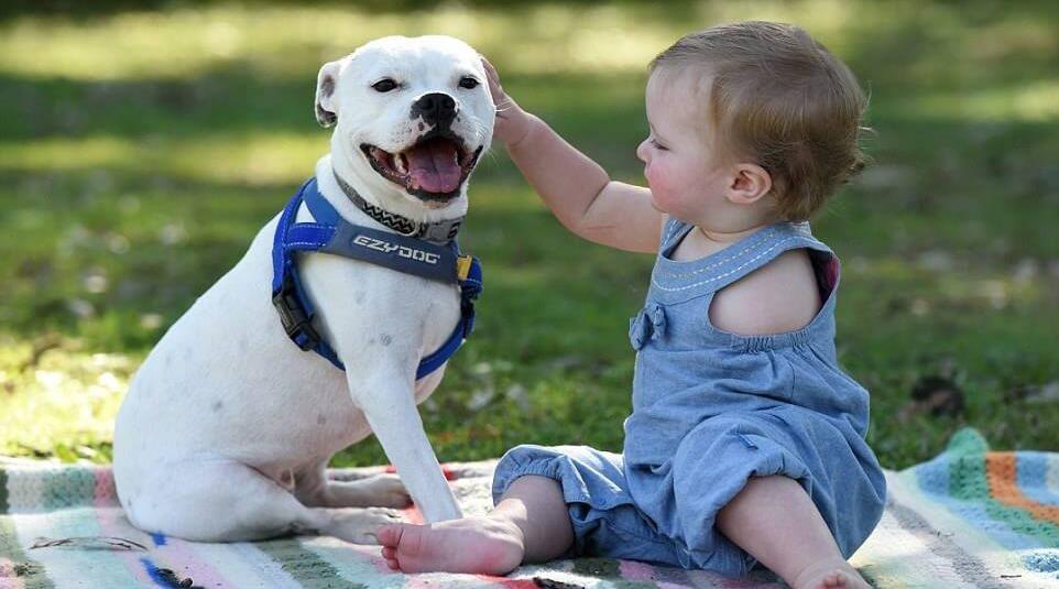 Niña-con-perro-de-tres brazos