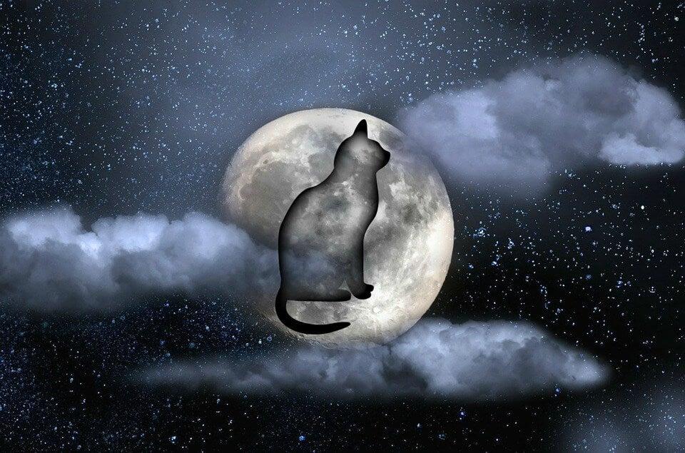 gato noche