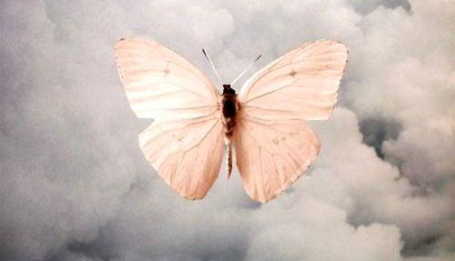 mariposa simbolizando el duelo
