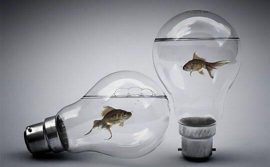 peces en una bombilla