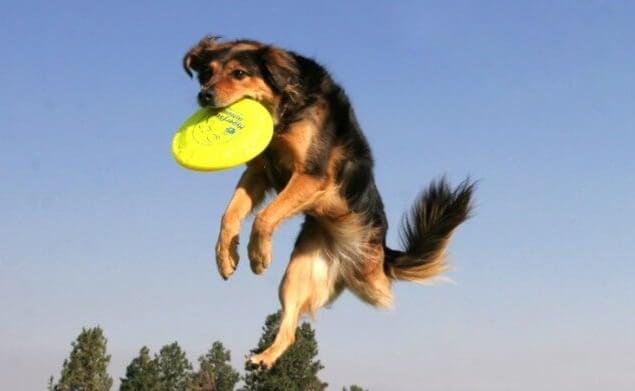 perro de tres patas