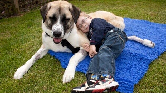 perro de tres patas con niño