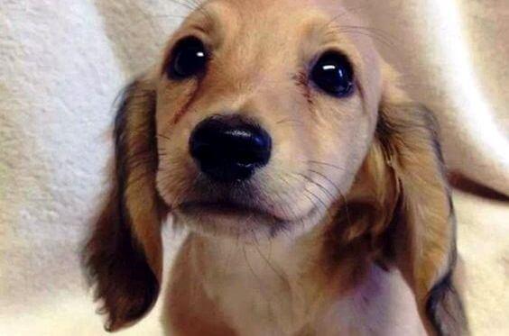 Los ojos de un animal tienen el poder de hablar un lenguaje único