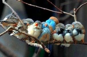 Pájaros representando a personas maravillosas