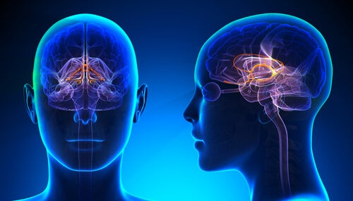 Cerebro con sistema límbico iluminado