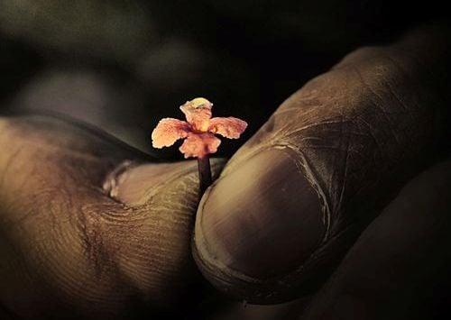 manos-con-flor