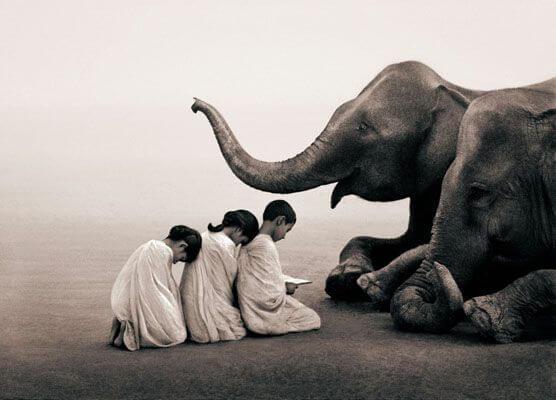 niños ante elefante