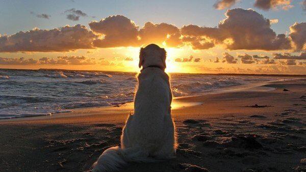 ¿Qué nos pueden enseñar los perros sobre nuestros problemas?