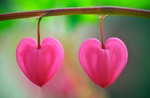 Pétalos en forma de corazón simbolizando el amor