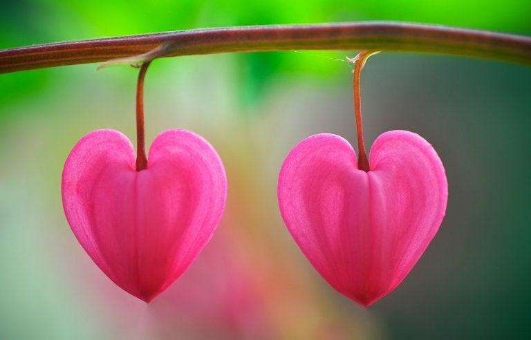 """""""Flores en el desierto"""", un cuento que te ayudará a reconocer el amor"""