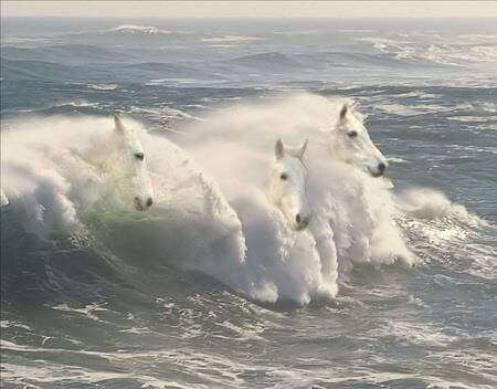 caballos-mar
