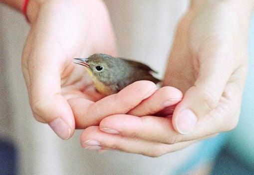 manos dando amor a un pájaro extraño