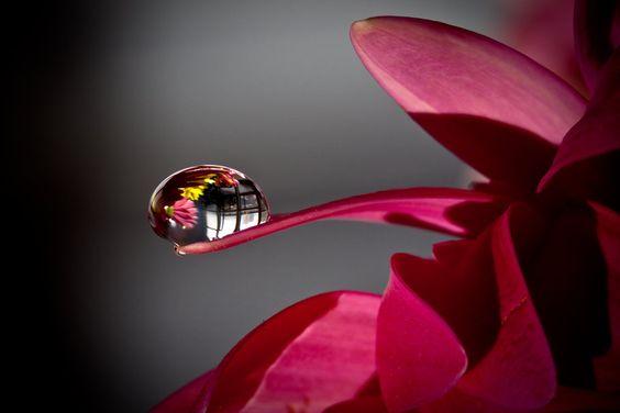 planta con rocío representando el llanto emocional