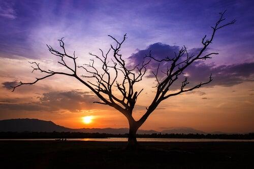 Árbol seco al anochecer