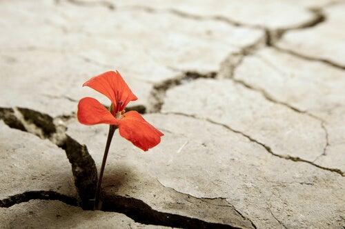 Flor roja en la carretera