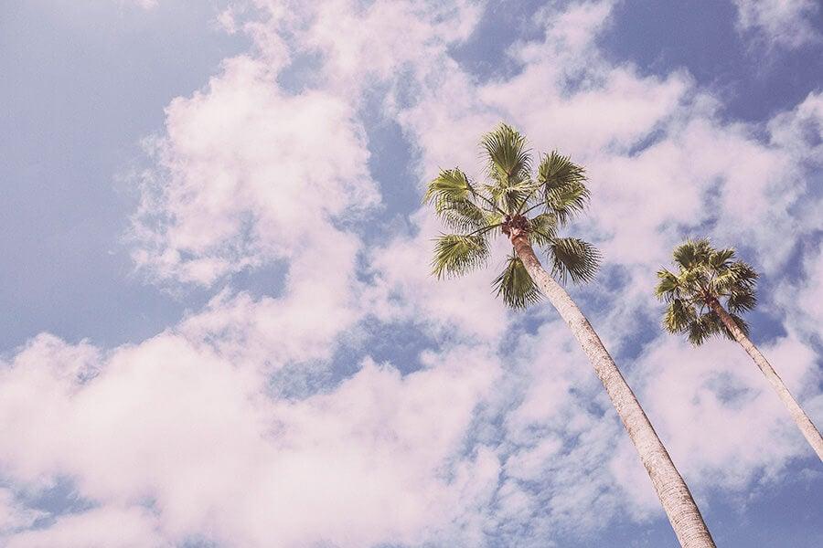 cielo y palmeras