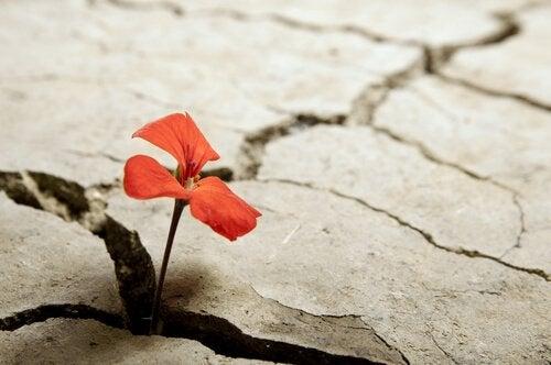 Flor que nace en el asfalto