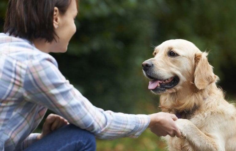 ¿Sabes cómo los perros reconocen nuestras caras?