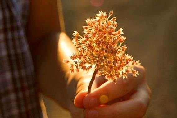 La bondad, si no se acompaña de acción, no sirve de nada