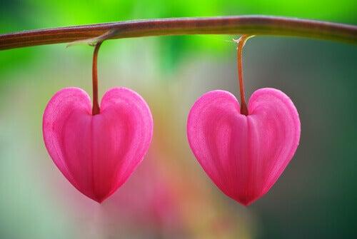 Pétalos con forma de corazón