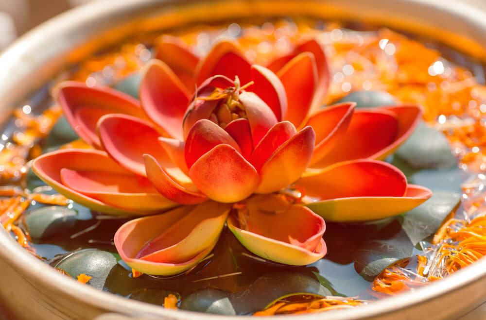 Flor de loto simbolizando los proverbios hindúes