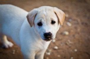 Perro triste representando maltratador de animales