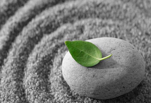 Hoja verde sobre una piedra