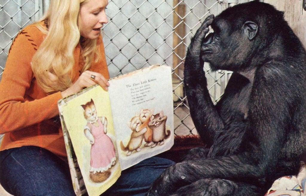 Koko y su instructora