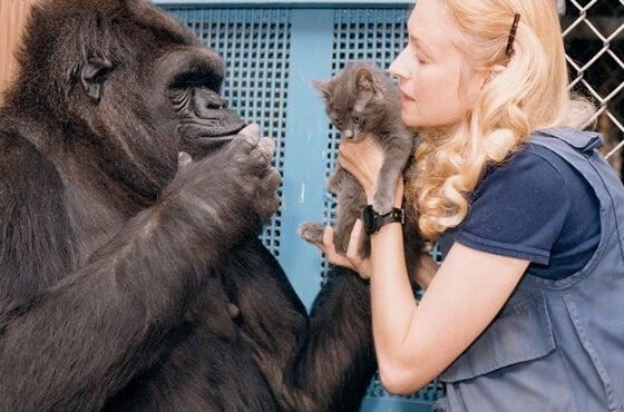 Koko con su instructora