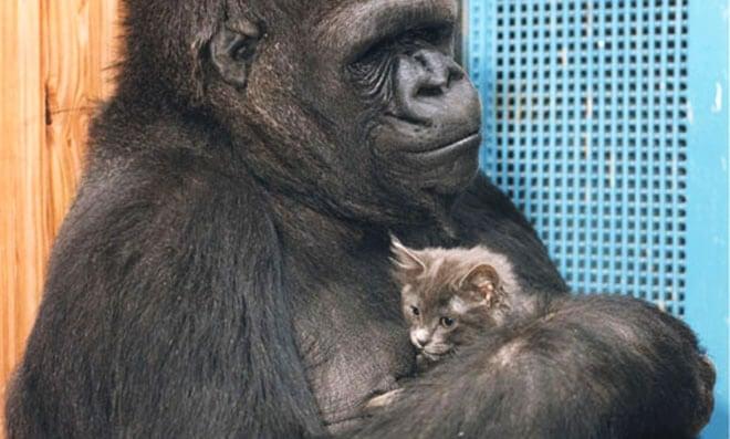 Koko y Bolita