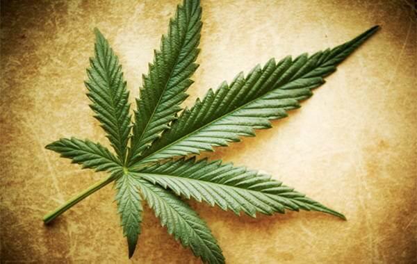 Mitos y verdades acerca de la marihuana
