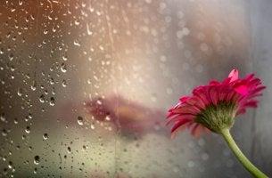 Lluvia y flor roja