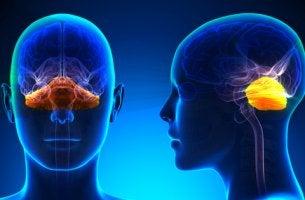 imagen del cerebelo