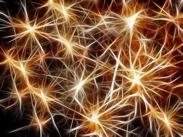 Neuronas en el cerebro