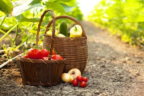 Alimentos del huerto