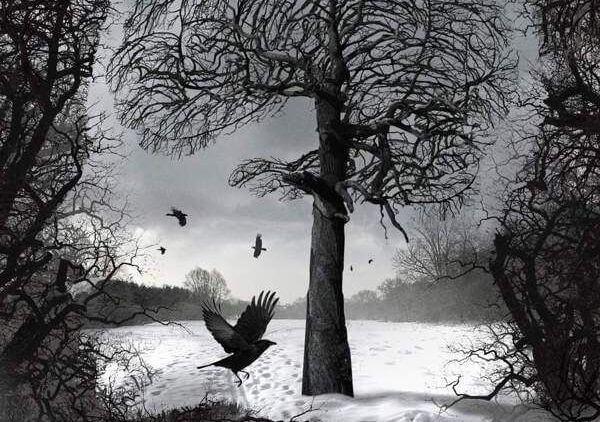 Cuervos en un árbol
