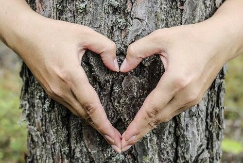 Manos haciendo forma de un corazón sobre un árbol