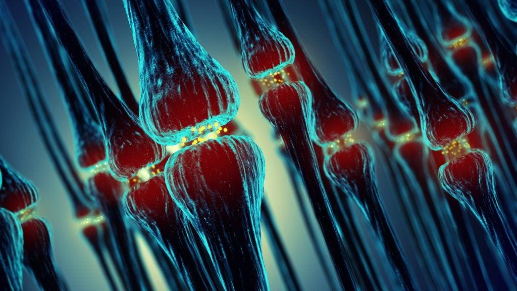 Conexiones sinápticas